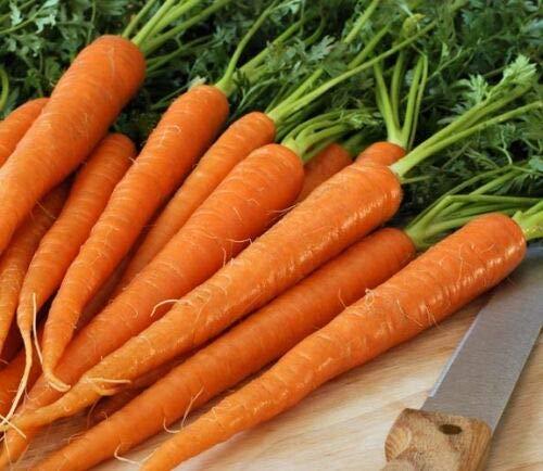 400 Seeds TENDERSWEET Carrot - JUICING - RAW - Canning - CORELESS