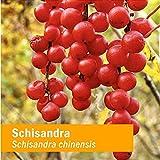Herb Pharm Certified Organic Schisandra Berry