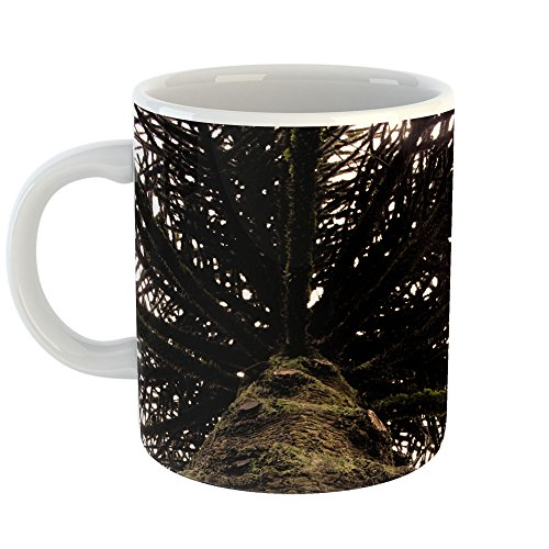 Plant - 11oz Coffee Cup Mug - Modern Picture Photography Artwork Home Office Birthday Gift - 11 Ounce (BD22-F5D3E) ()