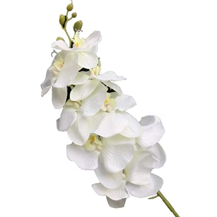 Amazon Jiumengya 10pcs Artificial Phalaenopsis Butterfly Moth