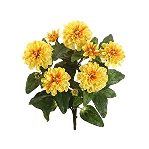 "18"" Zinnia Bush x5 Yellow (Pack of 12) 32"