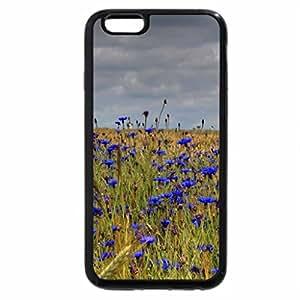 iPhone 6S / iPhone 6 Case (Black) blue belles in a wheat field