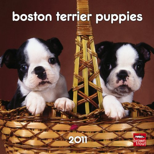 Boston Terrier Puppies 2011 7X7 Mini - Calendar Terrier Puppies 2010