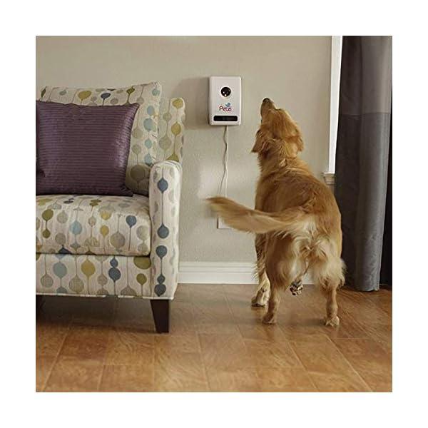 Petzi-Treat-Cam-Wi-Fi-Pet-Camera-Treat-Dispenser-Enabled-with-Amazon-Dash-Replenishment