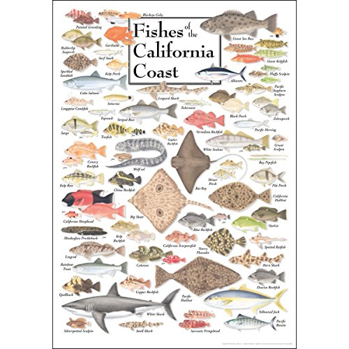 Earth Sky & Water Poster - Fishes of the California Coast