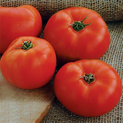 Tomato Mountain Glory F1 - Vegetable Seeds Package - 1,000 Seeds by GardenTrends