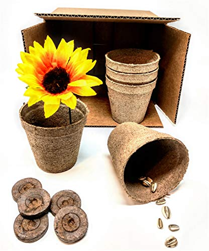 (Sunflower Grow Kit with Starter Mammoth Sunflower Seeds to Plant!)