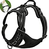 Leash For Dogs That Pulls Review and Comparison