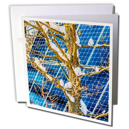3dRose Alexis Photography - Objects - Young Snow Covered Oak Tree and a Solar Power Panel in Winter Park - 12 Greeting Cards with Envelopes (gc_280889_2) -