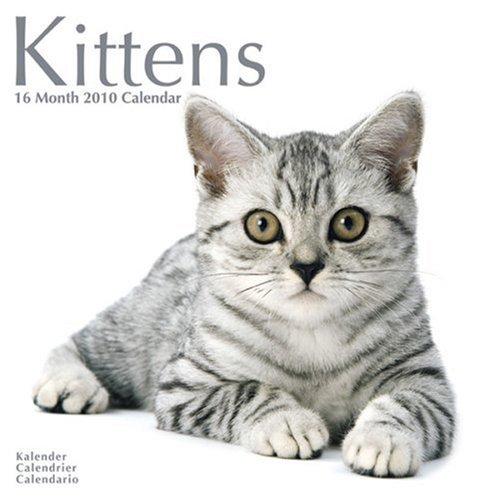 Kittens 2010 Wall Calendar ()