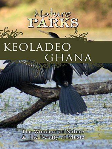 Nature Parks - Keoladeo Ghana - Rajasthan, India