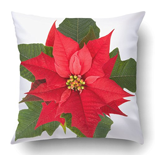 Emvency Pillow Covers Decorative Live Christmas Flower Red Poinsettia Pot Isolated On White Bulk With Zippered 18x18 Square Pillow Case For Home Bed Couch Sofa Car One Sided
