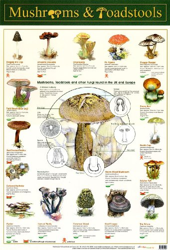 Laminated Mushrooms & Toadstools Fungi Mini Poster