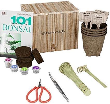 Kit de Iniciación de Bonsái Premium + Libro 101 Consejos Esenciales y Kit de Herramientas Completo - en Caja de Regalo de Madera Única - Cultive Fácilmente 4 Árboles a partir de Semillas: Amazon.es: Jardín