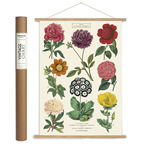 Cavallini Papers & Co. Vintage Botanica Hanging Poster Kit, Multicolor