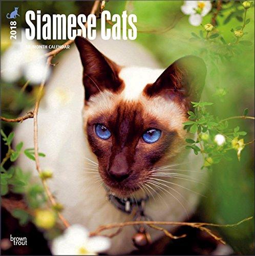 Cat Breeds - Cat Calendar 2018 ~ Deluxe Wall Calendar (12x12) (Siamese Cats Calendar 2018)