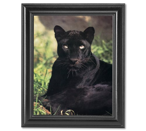 Black Up Close Panther (Black Panther Cat Laying in Grass Close Up Photo Wall Picture Framed Art Print)