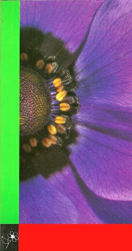 Snijbloemen - Cutflowers - Schnittblumen - Fleurs Coupees - Fiori da Vaso - Flores Cortadas 1994/95