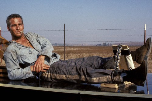 Paul Newman in Cool Hand Luke in chains smoking cigarette 24x36 Poster (Cigarettes Poster)