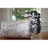 Oyster Mushroom Growing Kit--3 Pounds Log