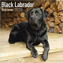 amazon black labrador retriever calendar 2018 square avonside
