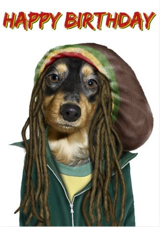 Reggae pets rock dog birthday card amazon kitchen home reggae pets rock dog birthday card bookmarktalkfo Image collections