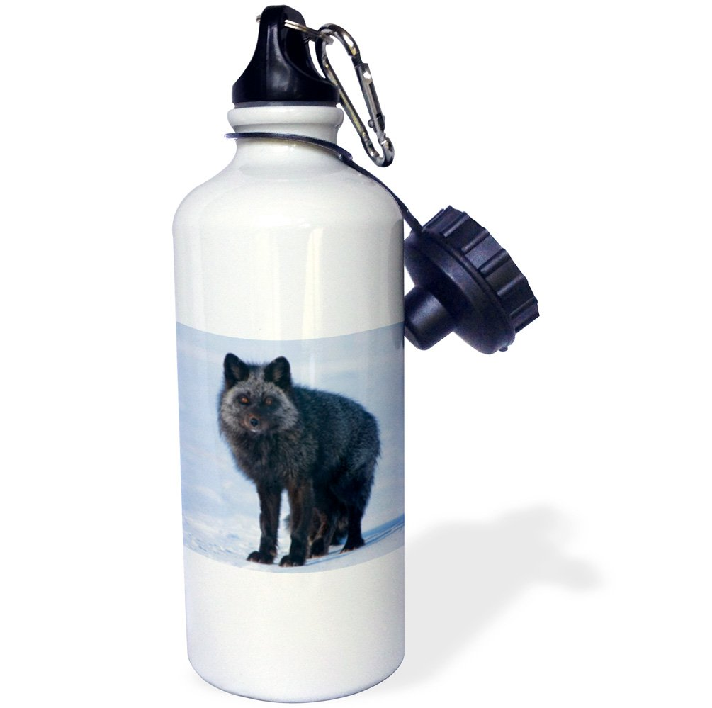 21 oz Multicolor Alaska Arctic NWR Adult Searching for Food -Sports Water Bottle 3dRose USA Red Fox wb/_191988/_1 21oz