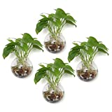 T4U Wall Mounted Hanging Glass Flower Vase Terrarium Pack of 4 Ball Shape - 4'', Clear Bubble Planter Tealight Holder for Home Office Wedding Wall Decoration Birthday