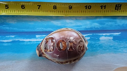 'Dora' Personalized Custom Engraved Shells. Names Engraved on a seashell - Hand Made - All Natural - Say It On A Shell - Name Dora