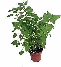 the 5 best office plants best low light office plants