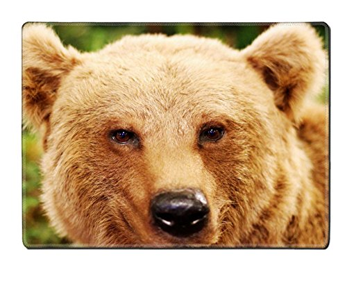 MSD Placemat IMAGE 21433293 cute face of a brown bear in the middle of the forests after hibernation (Embalming Table compare prices)