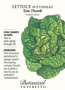 Tom Thumb Butterhead Lettuce Seeds - 2 grams - Heirloom