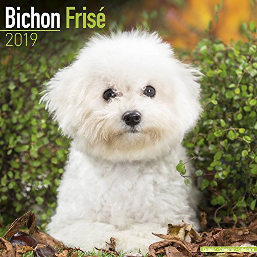 Bichon Frise Calendar 2019 - Dog Breed Calendar - Wall Calendar 2018-2019