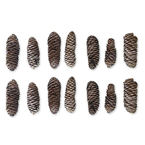 Banberry Designs Sugar Pine Cones – Set of 14 Large Pine Cones with a White-Washed Finish – Fall and Winter Decor by Banberry Designs (Image #4)