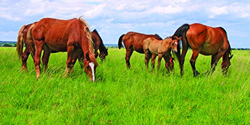 Nature's Seed 0.5 Acre Great Plains Horse Pasture Blend (Best Lawn Grass Seed For North Dakota)