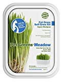 Pet Greens Self-Grow Pet Grass Kit