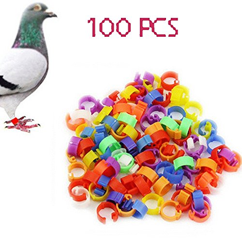 100pcs Pigeon Parrot Canary Poultry product image
