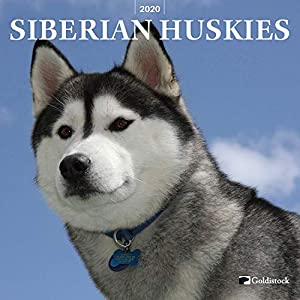 """Goldistock 2020 Large Wall Calendar -""""Siberian Huskies"""" - 12"""" x 24"""" (Open) - Thick & Sturdy Paper - - Fun-Loving and Outgoing Dogs 1"""