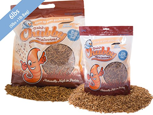 Chubby Mealworms Bulk Dried Mealworms for Wild Birds, Chickens etc. (6Lbs) by Chubby Mealworms