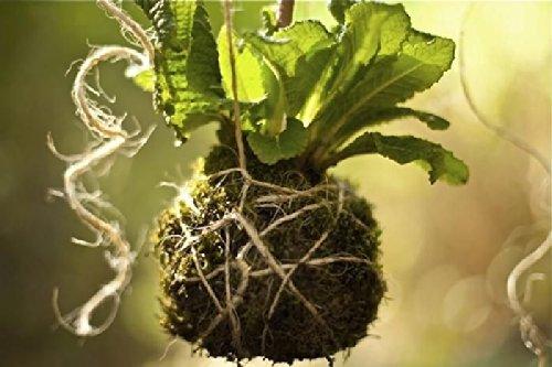 Growers gardener Jute Twine Natural Fiber Tool Bench 186610
