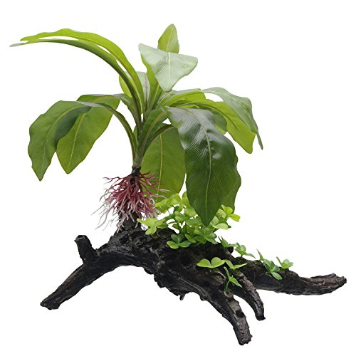 Fluval Striped Anubias Plant for Aquarium, 13.5-Inch by Fluval