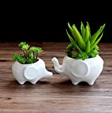 Wish you have a nice day Set of 2 Cute Elephant Flower Pot,Modern White Ceramic Succulent Planter Pots / Tiny Flower Plant Containers (elephant)