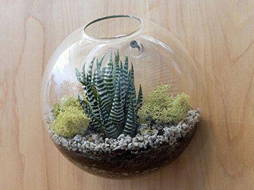 newdreamworld del terrario de burbuja de pared, colgar en la pared macetas, montado en la pared de la burbuja pecera de cristal, cristal jarrón de pared ...