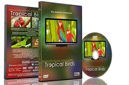 Watch Bird Flamingo - Relaxation DVD - Tropical Birds with Music or Nature Sound Calming Scenes of Pure Nature for Dogs and Cats and Happy People