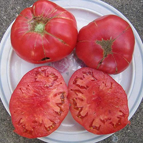 (Napa Giant Tomato Seeds by Pepper Joe's - 20+ Seeds Per Pack)