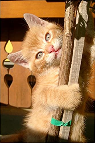 Book Climbing Orange Tabby Kitten Journal: 150 Page Lined Notebook/Diary