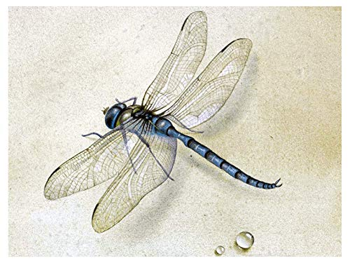 (Dragonfly by Fedor Tolstoy Water Drop Dew Accent Tile Mural Kitchen Bathroom Wall Backsplash Behind Stove Range Sink Splashback One Tile 8