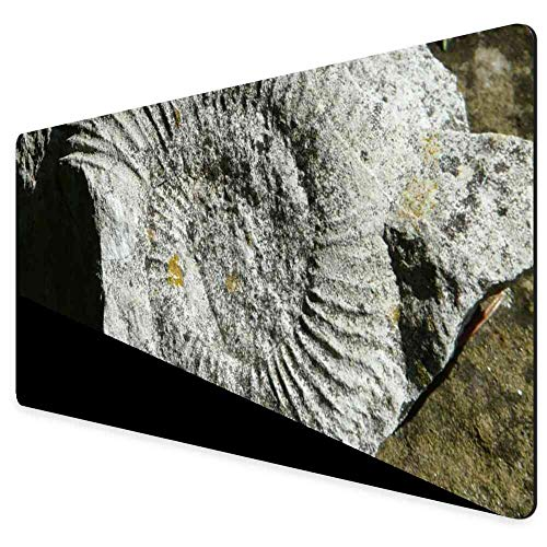 Mouse Pad Rectangle Mouse Pad Ammonit Petrification Snail Shell Limestone Fossil #54073 Series 260mm210mm3mm