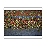 home drinking water treatment plant 10x8 Print of Budgerigars - Drinking - Papunya Aboriginal Community (14707966)