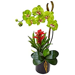 SKB Family Orchid And Bromeliad In Glossy Black Cylinder Natural Flower Silk Arrangement Green Color